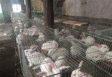 Cho thỏ ăn gì? Các loại thức ăn cho thỏ. Thức ăn nuôi thỏ thịt & sinh sản