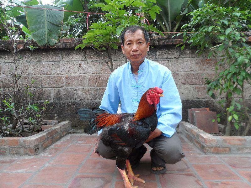 Giá gà Hồ Bắc Ninh giống thuần chủng. Giá gà lai Hồ giống