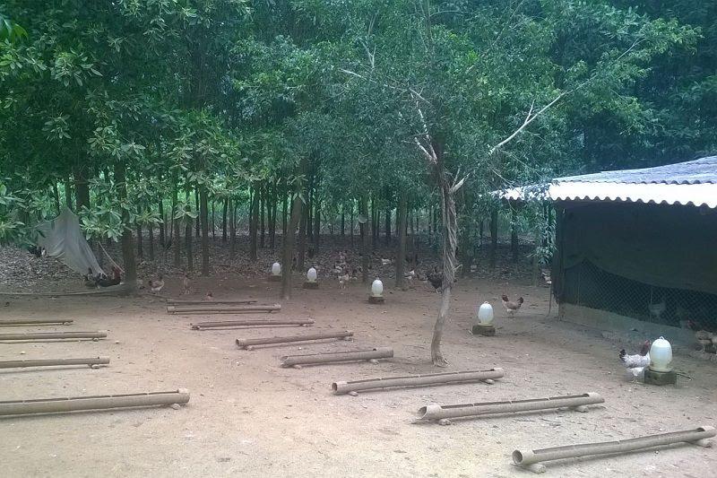 Cách làm chuồng nuôi gà thả vườn. Thiết kế chuồng gà thả vườn