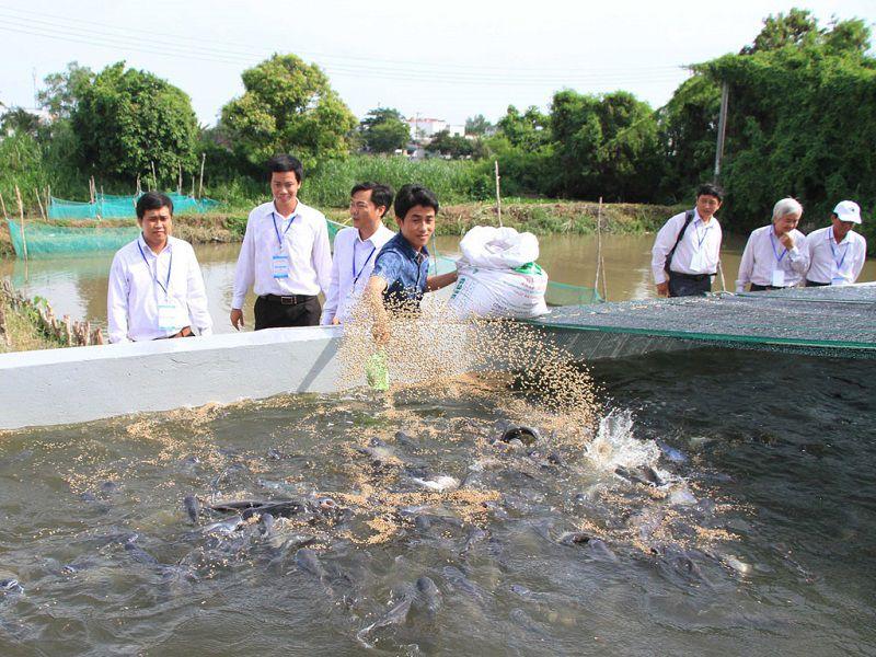 Cá lóc ăn gì? Thức ăn tự nhiên và thức ăn công nghiệp cho cá lóc