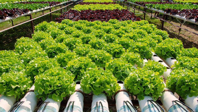 Kỹ thuật trồng rau thủy canh. Chi phí hệ thống trồng rau thủy canh