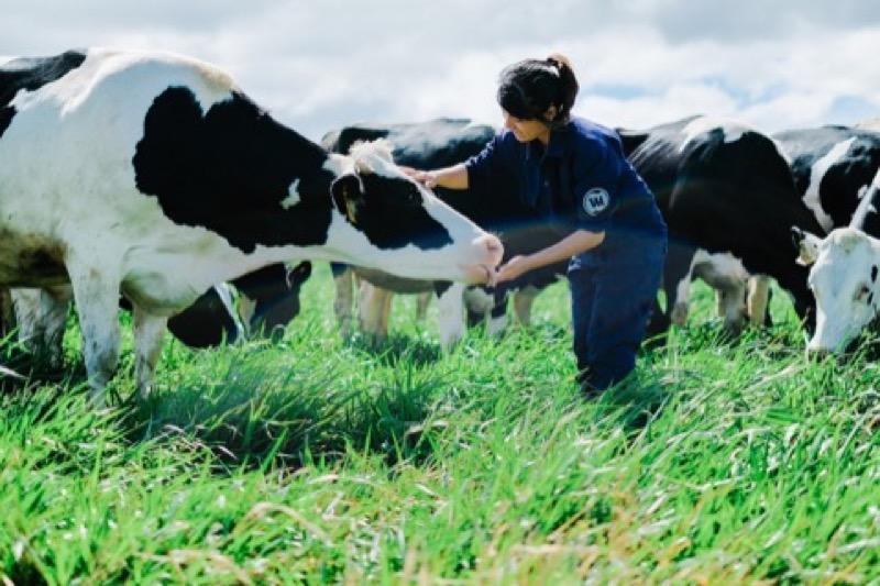 Chi phí đầu tư, sản xuất sữa bò tại trại. Một số trang trại bò sữa điển hình