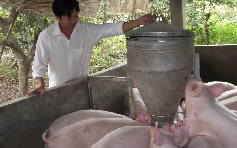 Mô hình nuôi lợn sạch VietAP: Thức ăn nuôi lợn sạch, Cách làm chuồng trại,...