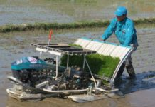 Các loại máy cấy lúa tốt nhất của Kubota. Giá các loại máy cấy lúa Kubota