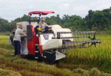 Giá bán máy gặt đập liên hợp Yanmar cũ mới. Máy gặt đập Yanmar tốt nhất