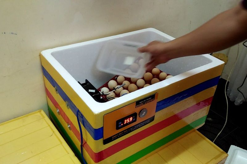 Hướng dẫn cách làm máy ấp trứng mini tự chế bằng thùng xốp tại nhà
