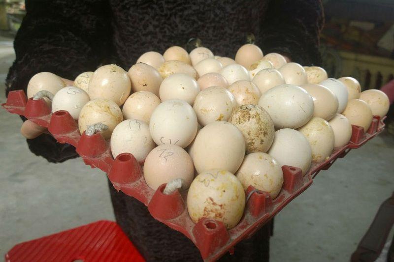 Cách nhận biết, soi trứng gà ung (ấp hỏng). Cách thử trứng gà bằng nước