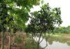 Chi Phí và Cách Xây Dựng Mô Hình Trang Trại Vườn - Ao - Chuồng (VAC)