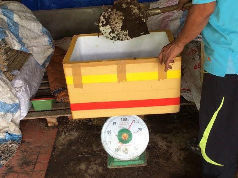 Cách nuôi giun quế tại nhà trong chậu, thùng xốp cho năng suất cao