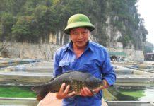 Giá cá chép giòn giống và thịt. Địa chỉ trang trại bán cá chép giòn giống