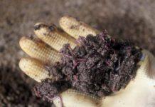 Cách nuôi giun quế bằng lục bình. Nuôi trùn quế bằng rác thải hữu cơ