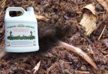 Dịch trùn quế là gì? Giá bán dịch trùn quế? Cách tự làm dịch trùn quế