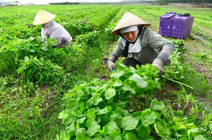 Kinh doanh gì ở nông thôn đang phát triển? Mô hình làm giàu ở nông thôn