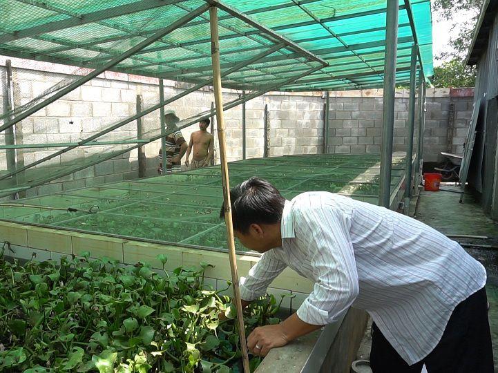 Kỹ thuật nuôi cà cuống sinh sản. Thức ăn cho cà cuống. Bể nuôi cà cuống