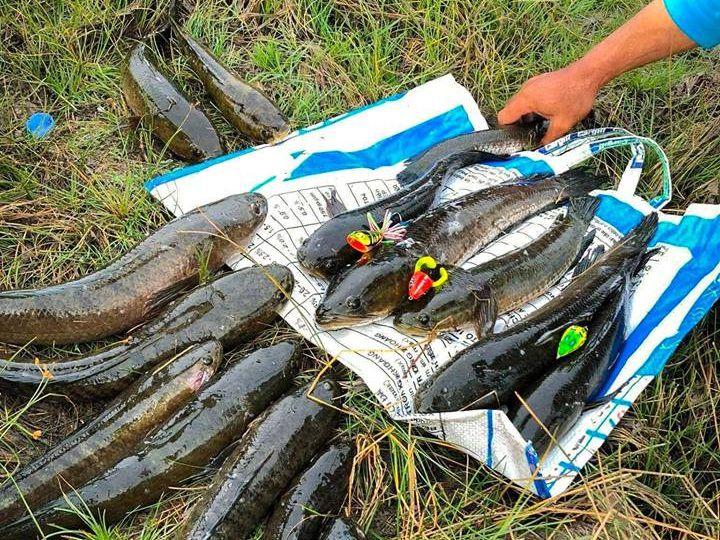 Cách làm mồi giả câu cá lóc. Mua mồi giả câu cá lóc ở đâu?