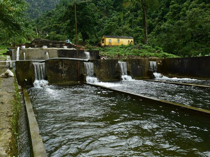 Cá hồi Việt Nam nuôi ở đâu? Kỹ thuật nuôi cá hồi ở Việt Nam