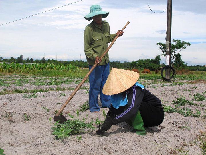 Nên trồng cây gì trên đất pha cát? Loại cây trồng thích hợp với đất cát