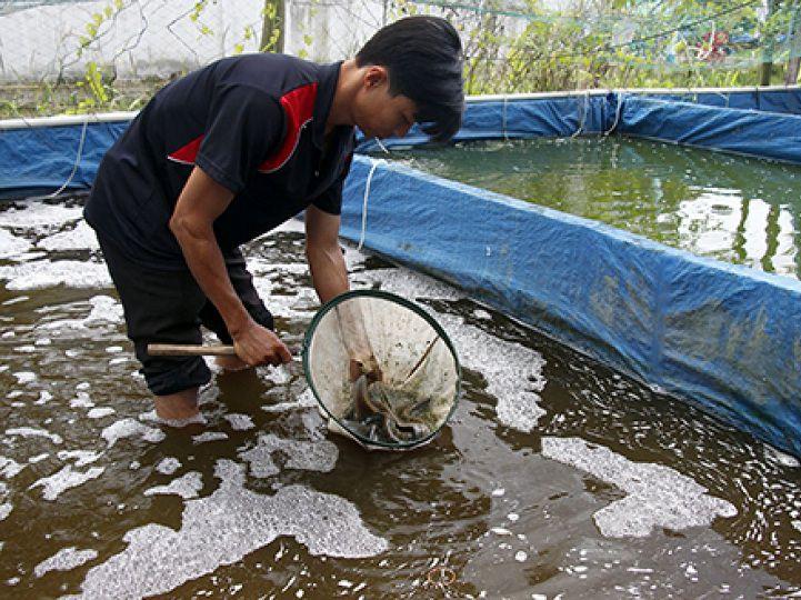 Kỹ thuật nuôi cá chạch lấu, chạch bùn trong bể xi măng