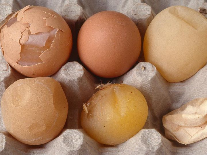 Tại sao gà đẻ trứng non? Cách chữa trị gà đẻ trứng non