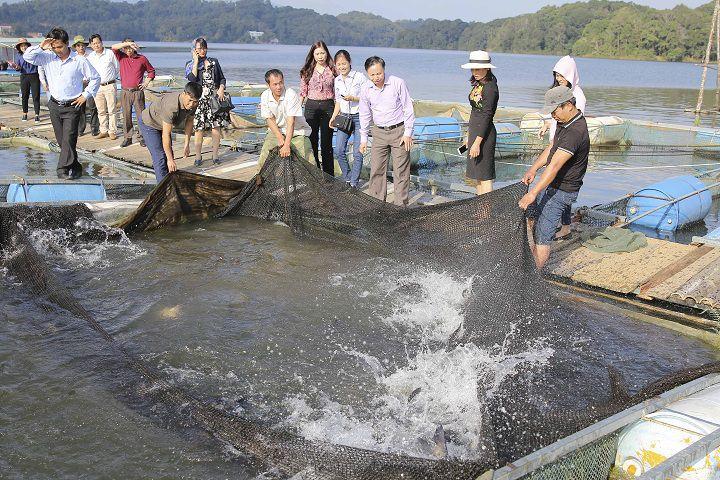 Kỹ thuật làm lồng bè nuôi cá bằng thép, gỗ, tre. Cách nuôi cá trong lồng bè